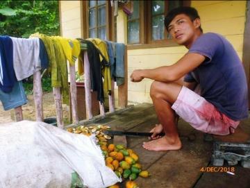 Inilah Penyebab Petani Pinairuk Mengolah Pinang