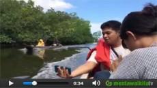 Menikmati Hutan Mangrove Tiop Siberut Selatan